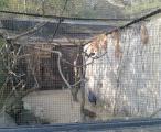 Zoo Prague, Botanical garden and Krizik Fountain